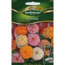 Zinnien Pepermint Sticks