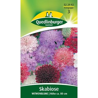 Skabiose Witwenblume Mischung