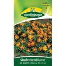 Studentenblume Mr. Majestic