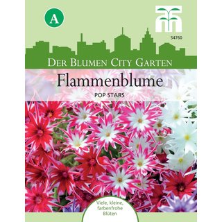 Flammenblume Pop Stars