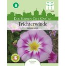 Trichterwinde Ensign Rose