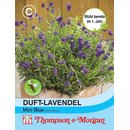 Duft-Lavendel Mini Blue