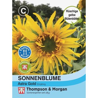 Sonnenblume Astra Gold