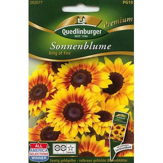 Sonnenblume Ring of Fire